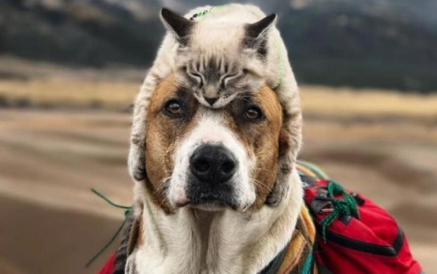 Супрун розповіла, як тварини впливають на здоров'я людини