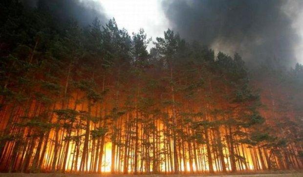 341 пожар произошел в Украине за минувшие сутки