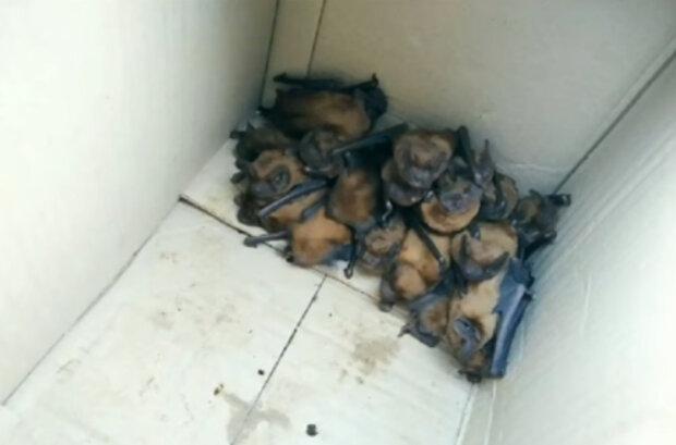 На Прикарпатті кабінет лікаря захопила колонія кажанів
