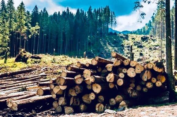 Син Луценка приклав руку до потопу на Прикарпатті журналісти розкрили схему дерибану українських лісів