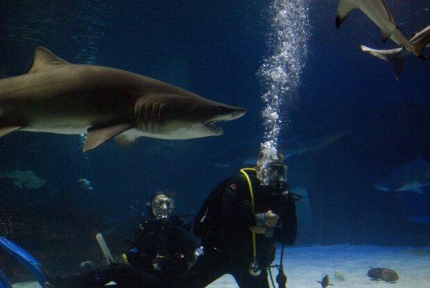 дайвинг с акулами, фото Pxhere