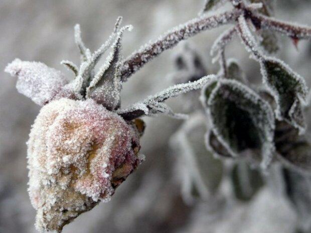 Зима буде ніжною з Івано-Франківськом 14 грудня