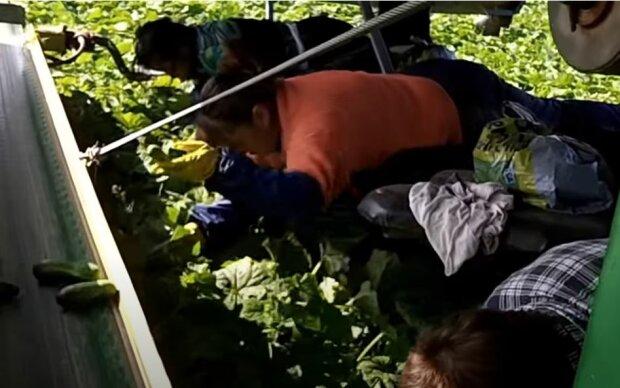 Огірки, скріншот: YouTube