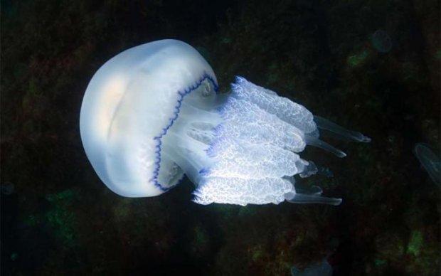 Азовское море атаковали гигантские медузы, причина поражает