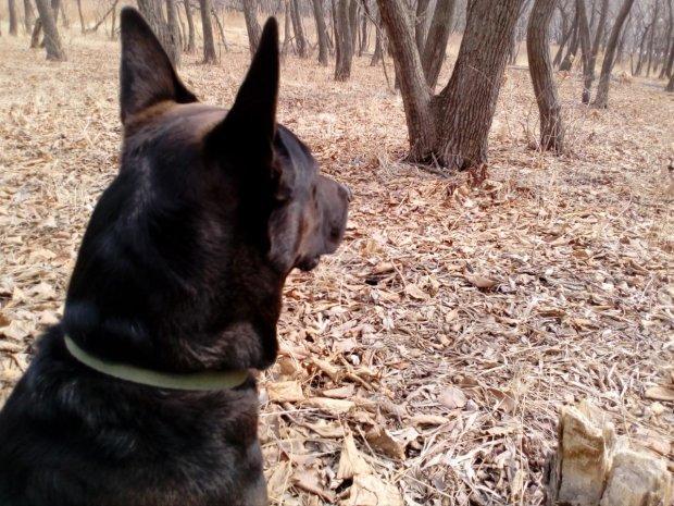 """""""Собака нашла коробку, полную мертвых"""": жуткая находка перепугала киевлян, фото 18+"""