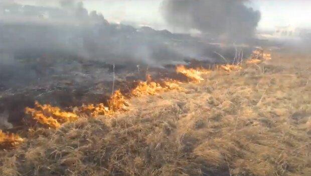 Горит сухостой, скриншот из видео