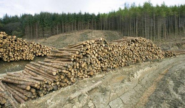 Звільнення головного лісника не врятують Карпати від вирубки