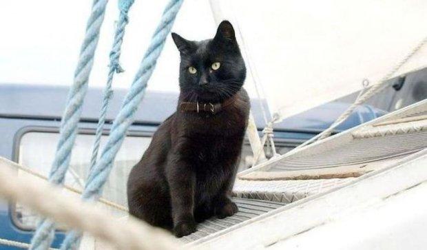 """На """"вакансию"""" корабельного кота ищут кандидата с опытом работы"""