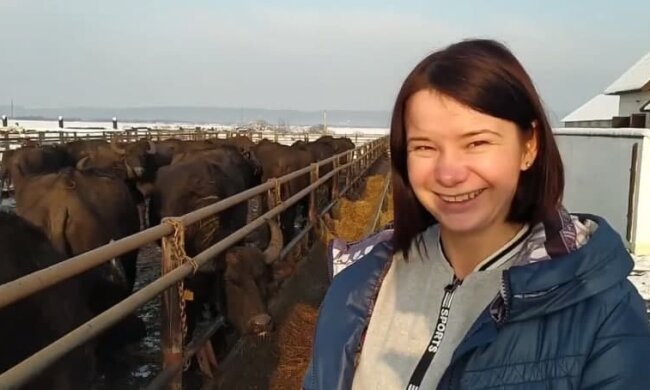 """Закарпатские буйволы возрождают популяцию, только посмотрите на этих красавцев: """"Помогали всей Украиной"""""""