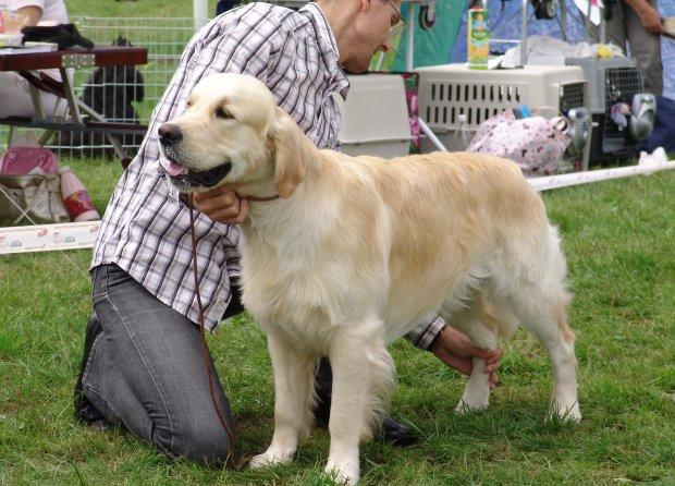 Собака-психолог рятує життя на Донеччині: дозволяє фарбувати собі лапи та розважає людей