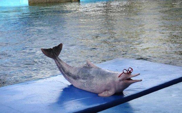 Волшебные очки помогут видеть мир глазами дельфинов
