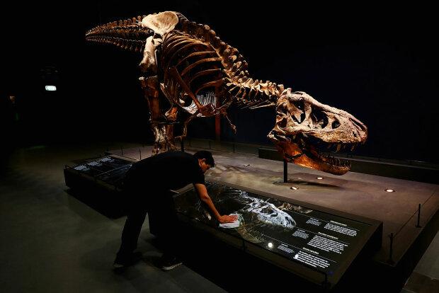 Скелет динозавра, фото: Getty Images