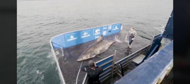 В сети ученых попала пятиметровая акула - бороздит океан 50 лет