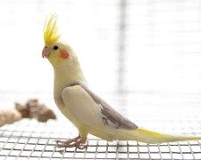 Попугай-истеричка закатил скандал кусочку древесной коры