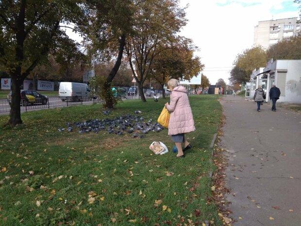 """Життя львів'ян отруїли недоїдками для голубів: """"Не викидайте, смердить!"""""""