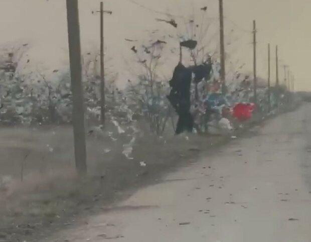 сміття на деревах, Миколаїв - скрін з відео