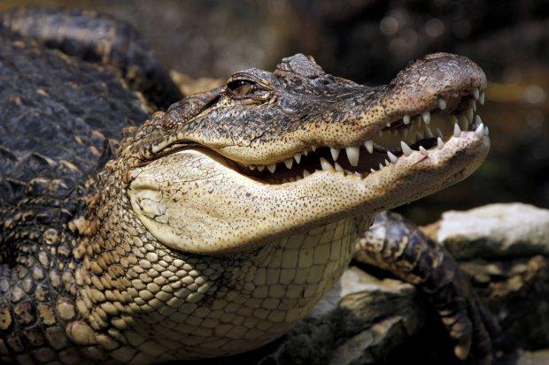 """500 чоловік прийшли на похорон крокодила """"що розуміє"""": ми втратили друга і боже стрворіння"""