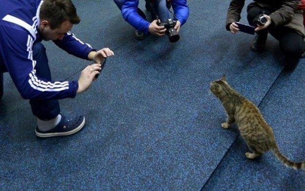 Фотограф показав котів такими, якими їх не бачив ніхто