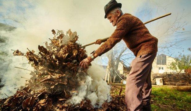 Дорогая листва: почему лучше не разжигать костры и сколько придется платить за это развлечение