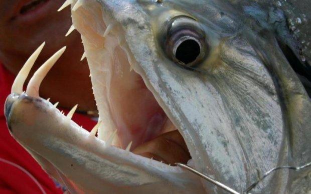 Риба-мутант з людськими зубами ледь не проковтнула дитину: фото