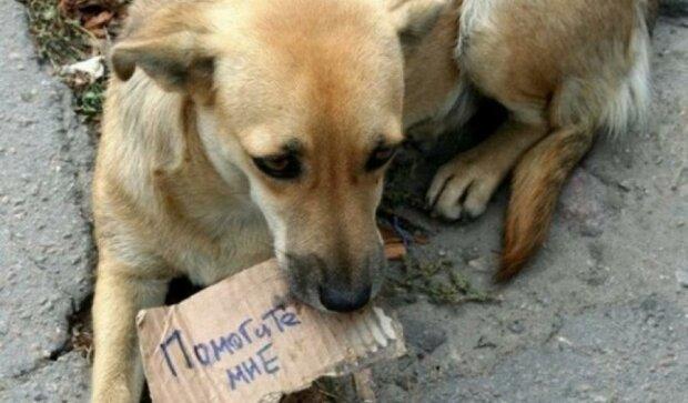 Безпритульні тварини Києва просять допомоги