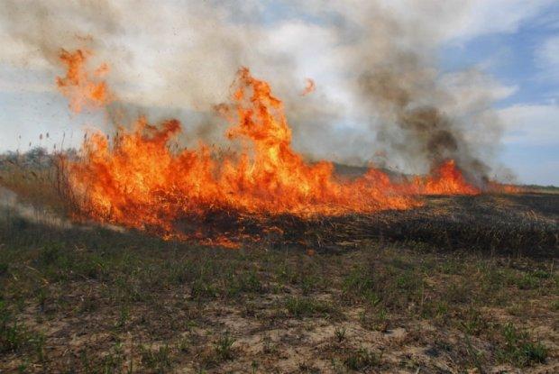 Сибирские власти обвинили в степных пожарах диверсантов
