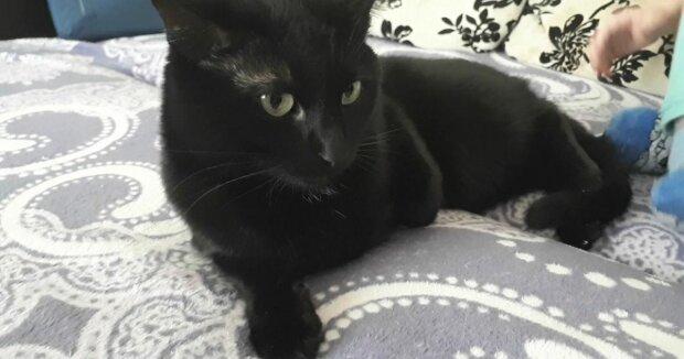 Кот, фото из открытых источников