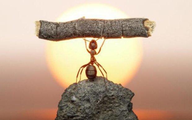 Африканские муравьи имеют собственный военный кодекс