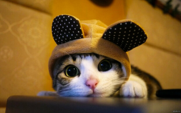котенок, pikabu