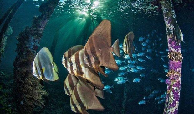 ТОП-20 лучших кадров подводного мира за 2015 год