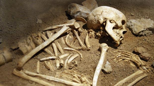 Скелеты, вложенные спиралью не на шутку встревожили ученых: видео