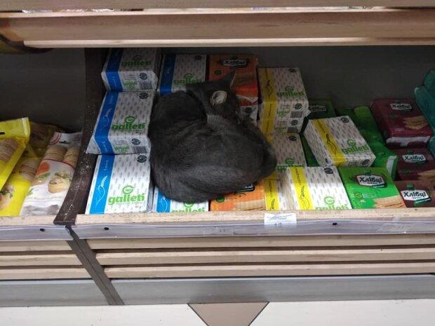 Кіт в одеському магазині, фото: Telegram