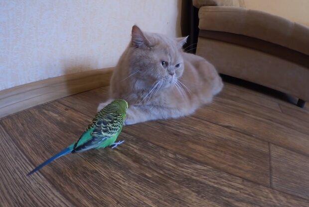 Кіт і папуга, кадр з відео