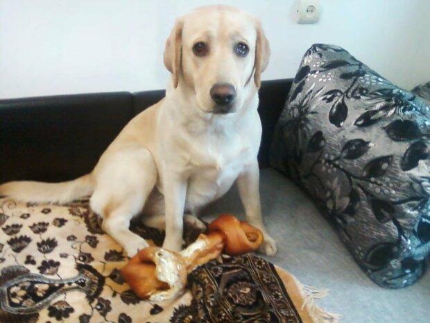Собака, фото: соціальні мережі