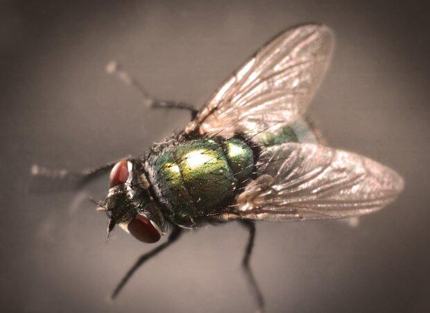 муха, фото Pxhere