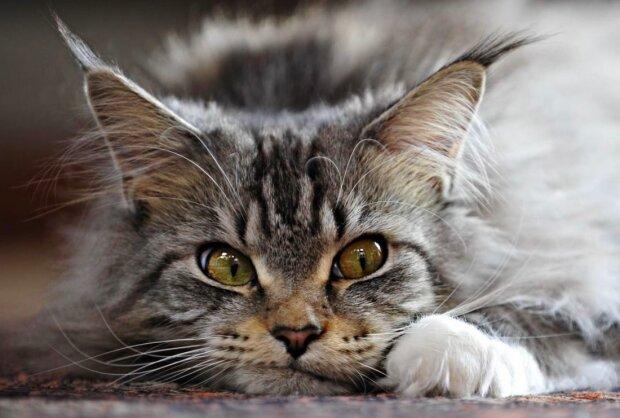 кошка, pxhere