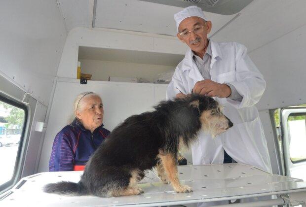 Перерезал малышу горло: история с днепровским псом получила неожиданное продолжение, трогательные кадры