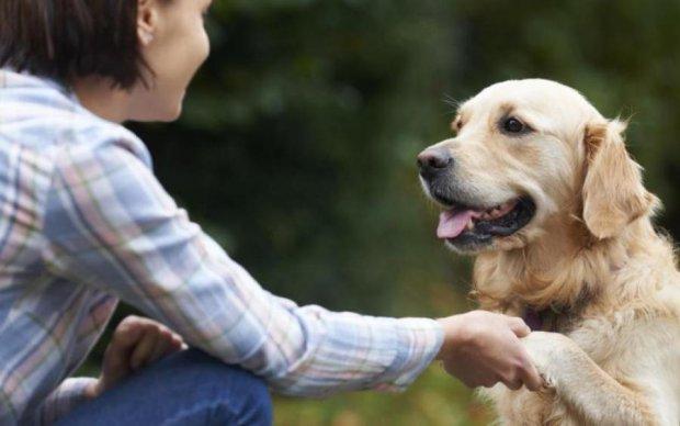 Вчені з'ясували, як собаки заміняють лікарів
