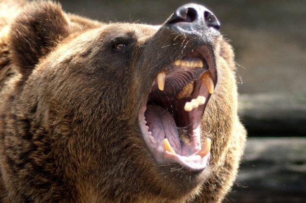 Медведь покромсал украинку на популярной базе отдыха: жуткое видео
