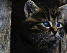 В Харькове поиздевались над кошкой, фото: 24 канал