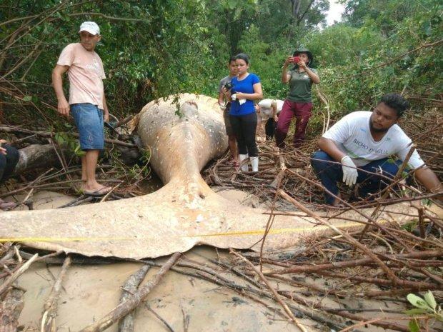 """В джунглях Амазонки обнаружили гигантского """"горбуна"""": как он туда попал"""