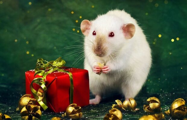 Рік Білого Пацюка