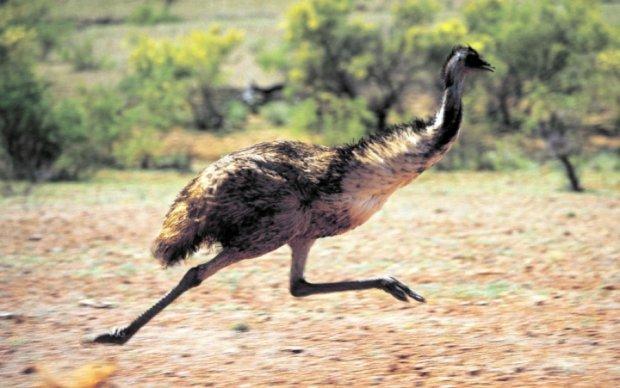Двоє чоловіків посварились через страуса: відео