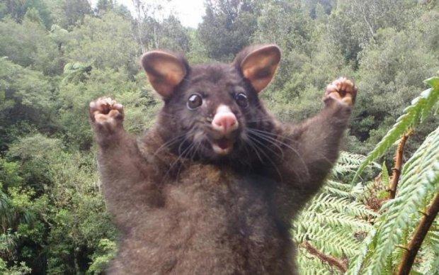 Історія Вінні-Пуха повторилася в реальному житті... тварина в шоці