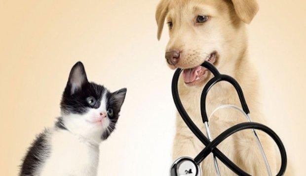 Пет-терапия: когда домашние животные лечат