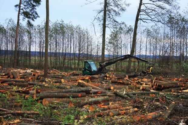 Вирубування лісів в Україні