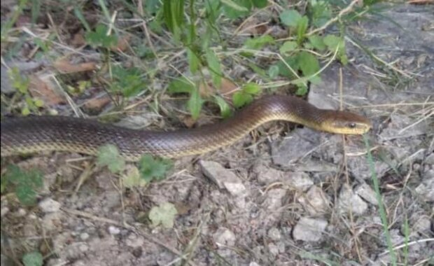У лісі під Києвом змія вчепилася дитині в руку: покарала за цікавість