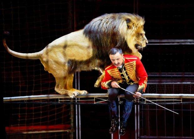 Розлючена левиця перетворила цирковий виступ на криваве пекло, відео 18+