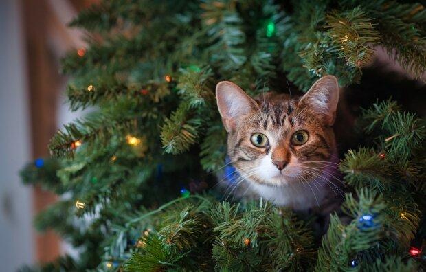 кот, фото: GoodFon