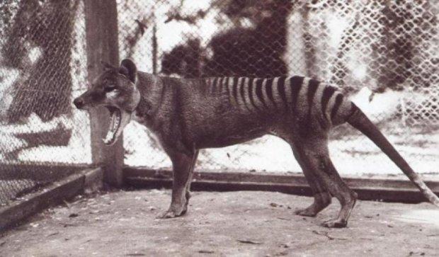 Давно вымершее животное попало в объектив камеры